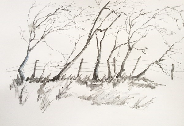 """TREES I""  Pencil Drawing.  Available at IN THE MOUNT, Ballycastle. Framed."
